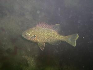 06_Fisch